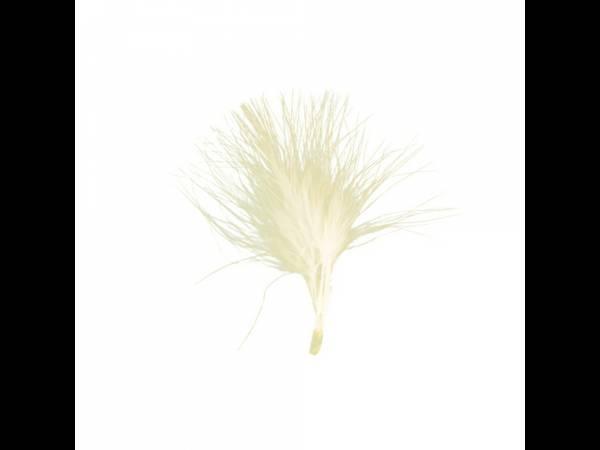 plumes de couleur ivoire