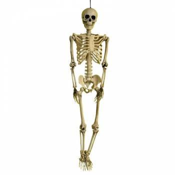 Squelette 3D réaliste