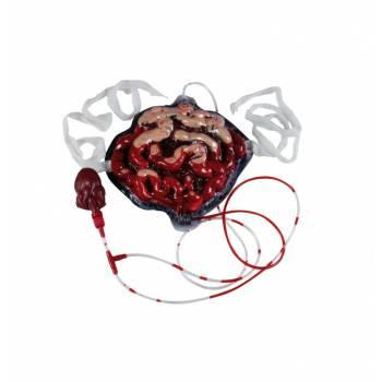 Faux intestins avec pompe à sang