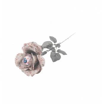 Rose blanche sanglante globe occulaire