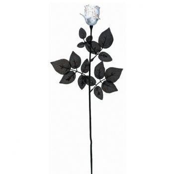 Rose blanche sanglante