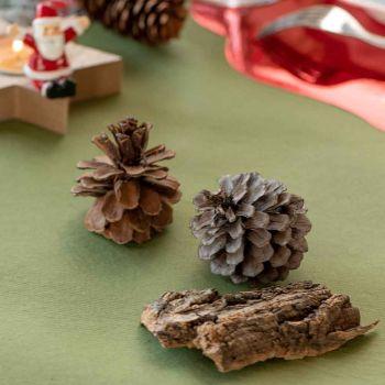 Assortiment nature bois et pomme de pins